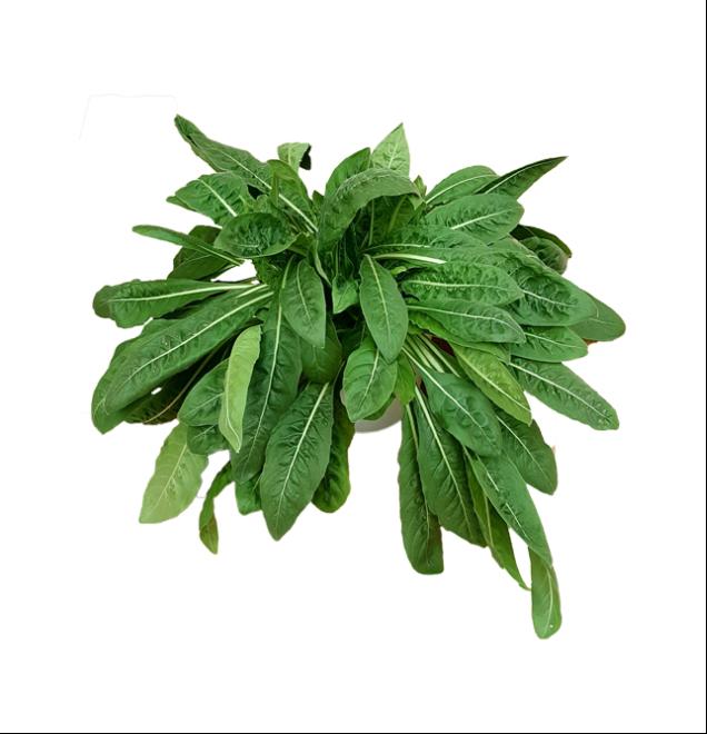 aromáticas-onagra