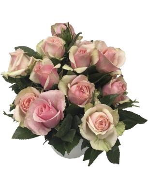 rosa Pearl  catalogo